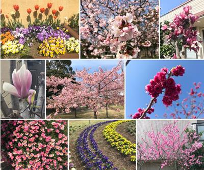 2021 spring flowers collage