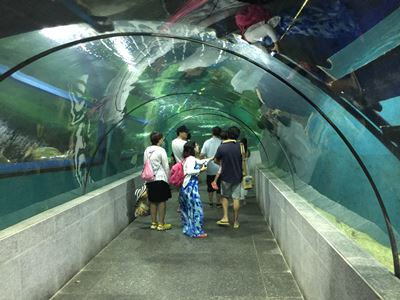 Boracay Crown Regency Oceanarium tunnel walk