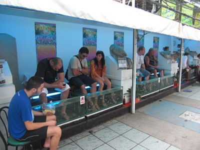 Dr. Fish pedicure spa, Patong, Phuket