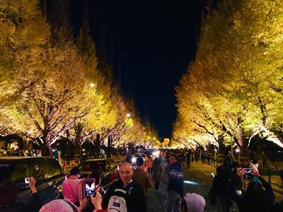 Nighttime lightup of Gaien Ichou Namiki Dori
