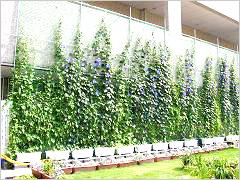Goya green curtain in Osaka