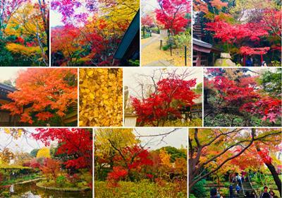 Hondoji Temple fall colors - Dec. 2, 2018