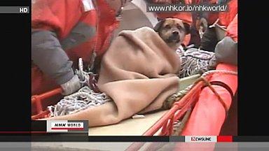 Japan Kesennuma miracle dog
