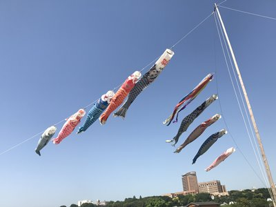 Koinobori (鯉幟, carp streamers) along the Edo River (江戸川) in Tokyo