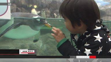 Tsunami-hit aquarium in Miyagi reopens