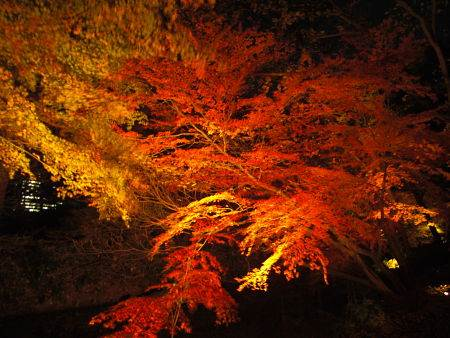 Nighttime fall colors in Rikugien Garden