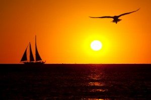 sailboat & gull at sunset