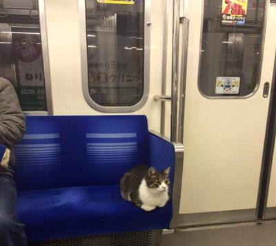 Tokyo's train riding cat