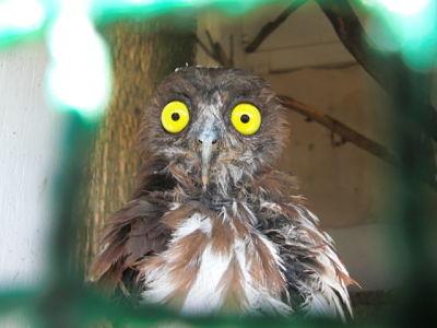 bird hospital patient