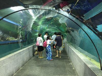 Boracay Crown Regency Oceanarium tunnel walk