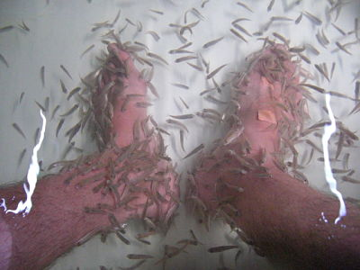 Dr. Fish pedicure treatment