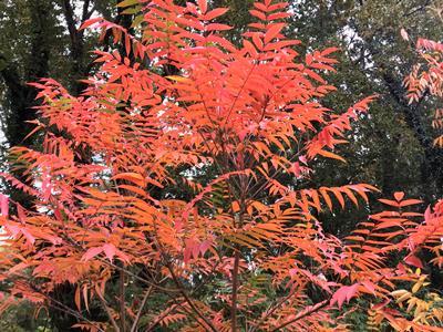 fall colors in Mizumoto Koen