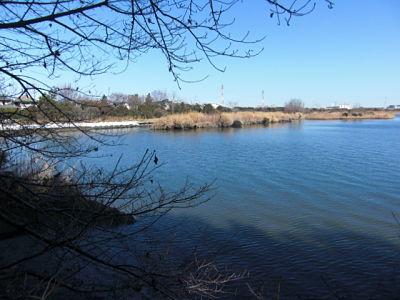 Gyotoku Bird Observatory tidal flats