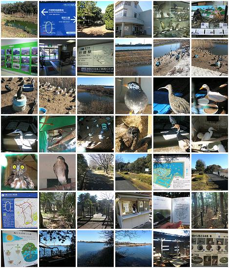 Gyotoku Bird Observatory photos