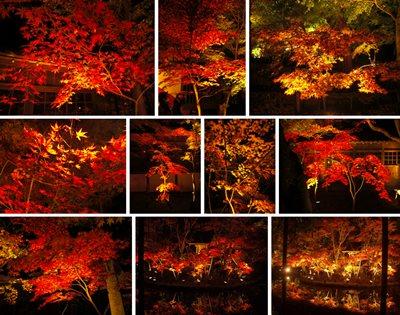 Nighttime light-up of Hondoji fall colors