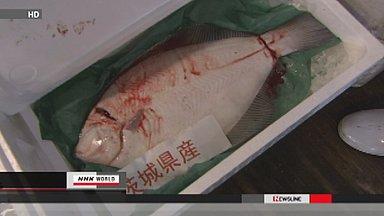 Ibaraki fish trade at normal prices