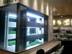 Tokyo Subway sandwich shop hydroponic leaf lettuce