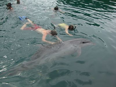 Swimming with the dolphins in Palau