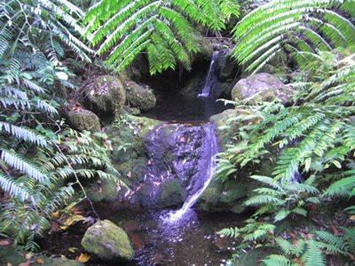 Small waterfalls along Papua Stream