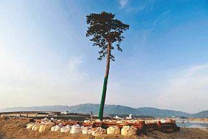 Takata Matsubara forest pine tree