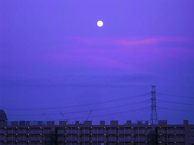 Tokyo blue moon