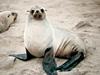 True seal
