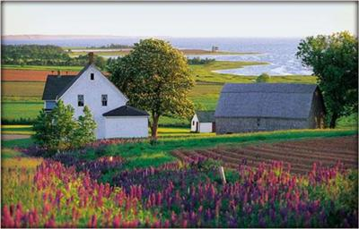 Scenery of Prince Edward Island (1)