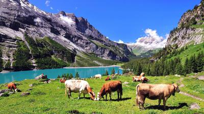 The Swiss Alps in summer