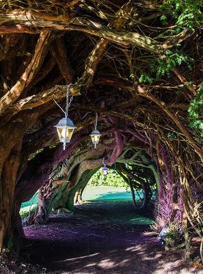 Yew Tunnel at Aberglasney Gardens