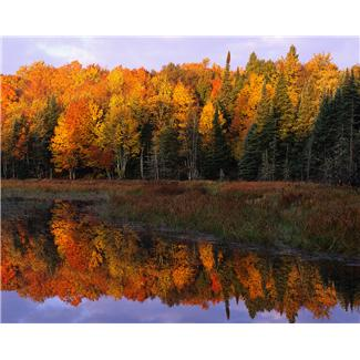Beautiful forest with fall colors